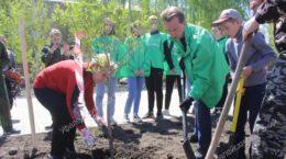 экология деревья Зелёный город Верхний Уфалей