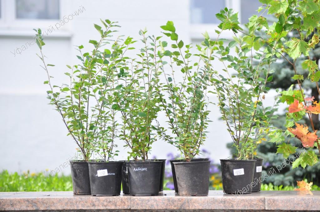 В Уфалее продолжилась акция «Зелёный город начинается с тебя»